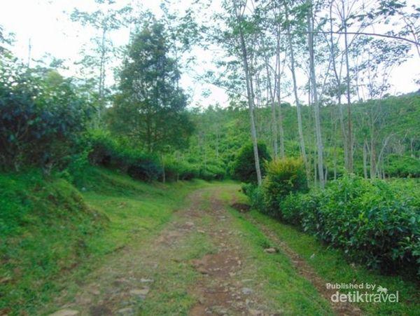 Ada Curug Secantik Ini Di Sekitar Perkebunan Teh Subang