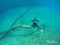 Ini pohon ikonik Dasar Labuan Cermin. Spot foto paling keren. tidak terlalu dalam, hanya sekitar 4-7 meter tergantung pasang surut.