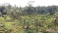 Terasering sawah yang cantik ini berada di Desa Tegallalang