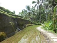 Berbagai sisi di sawah terasering Desa Tegallalang