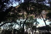 Pepohanan di balik kawah, tempat sejuk untuk menikmati kawah Di balik rindang pohon