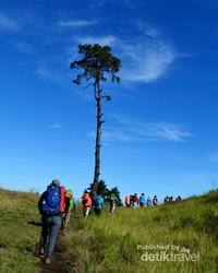 Menapaki rerumputan di Gunung Prau