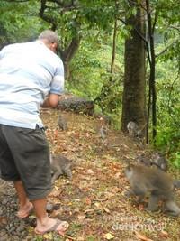 memberi makan monyet-mnyet