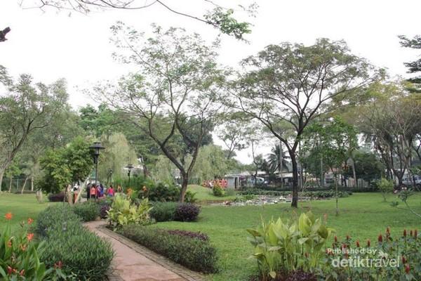 Pohon tabebuya yang tumbuh di Taman Tabebuya