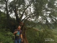Rumah Pohon Ciherang