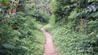 Salah satu jalur trekking ke Desa Wae Rebo