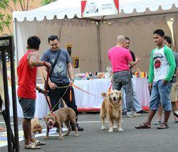 Pecinta Kucing dan Anjing Berkumpul di Extrapawganza 2014