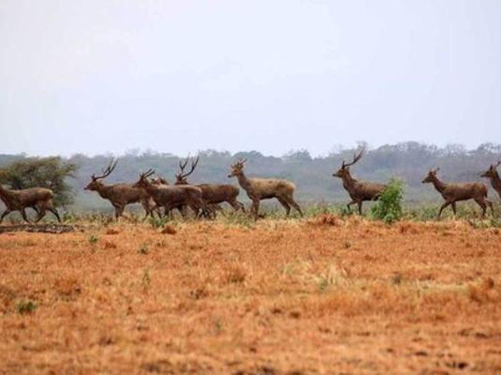 Taruh Ponsel & Jelajahi Serunya 4 Taman Nasional Eksotis