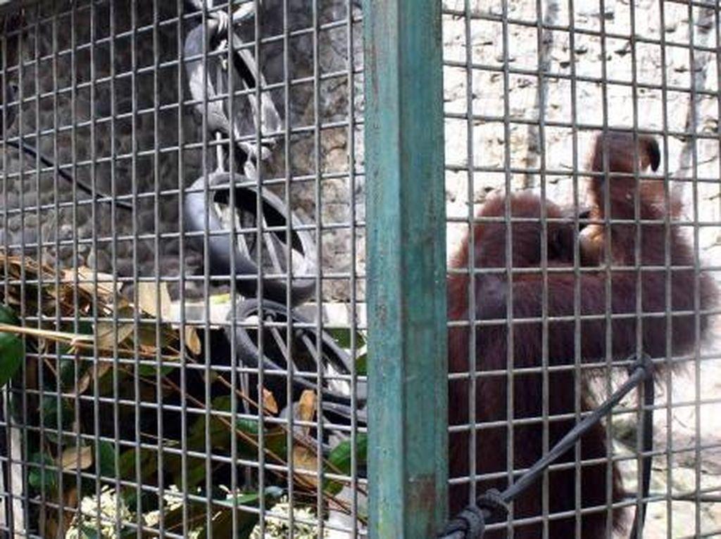 Belajar Cinta Fauna di Pusat Penyelamatan Satwa Yogyakarta