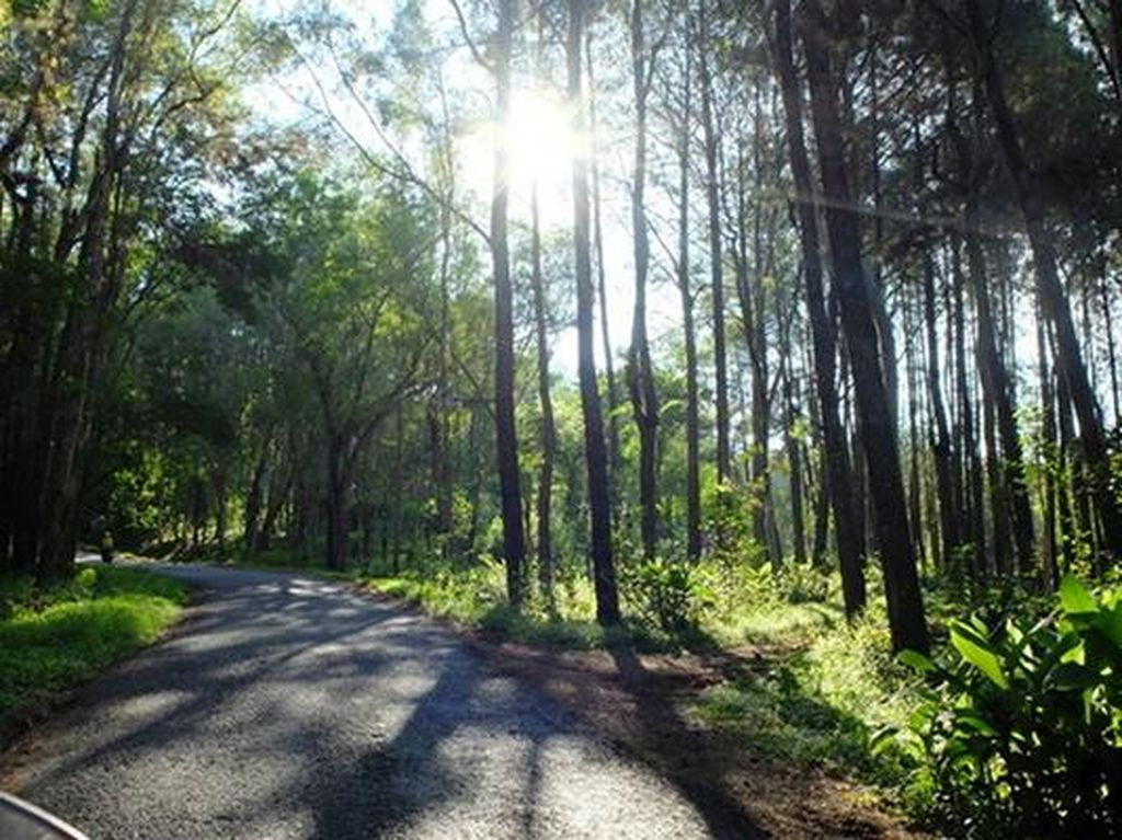 Hutan Romantis Ala Film Twilight Ada di Bantul