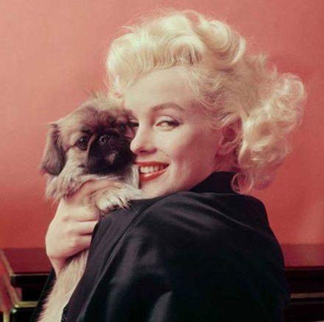 Citaten Marilyn Monroe Meninggal : Rumah tempat marilyn monroe meninggal dijual rp m