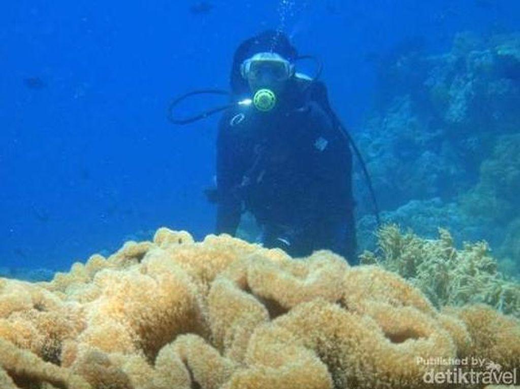 Ini 4 Spot Diving Terbaik di Wakatobi