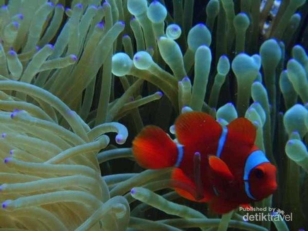 Pulau Tomia di Wakatobi, Destinasi Wajib Kunjung Buat Penggemar Diving