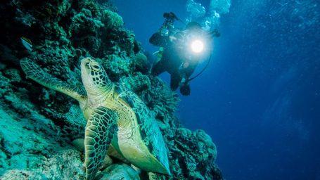 Ini Pilihan Spot Diving Di Tulamben, Yuk Menyelam!