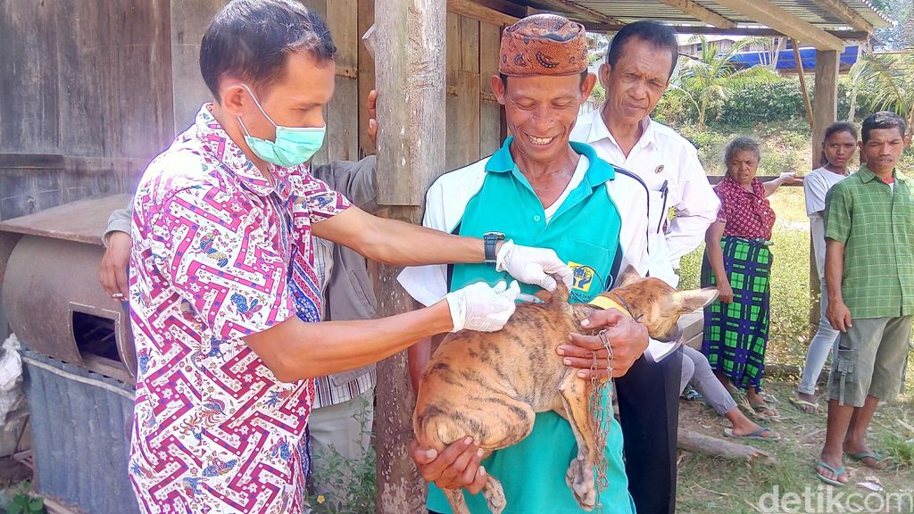 Begini Hiruk Pikuk Vaksin Rabies Massal untuk Anjing di NTT