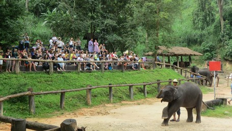 Aksi Gajah Thailand, Dari Main Bola Sampai Melukis