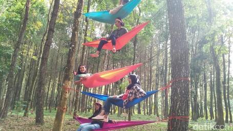 Mumpung Belum Viral, Ayo Ke Hutan Pinus Banyuwangi