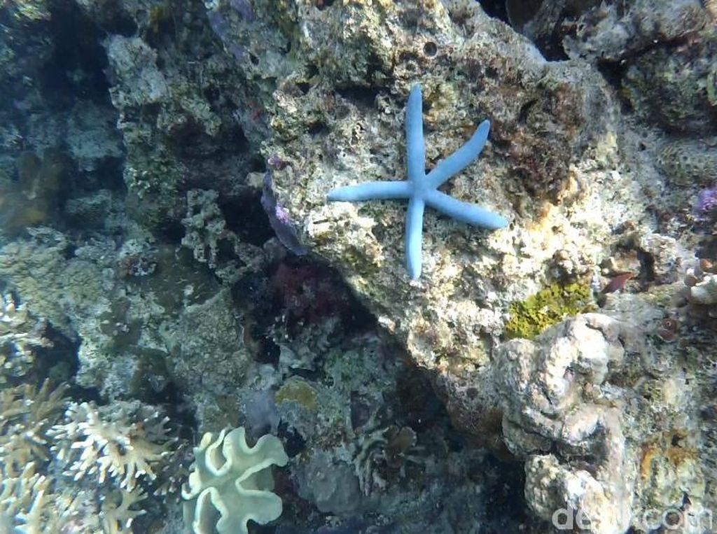 Tempat Diving Keren di Wakatobi, Teman-teman Kamu Belum Tahu