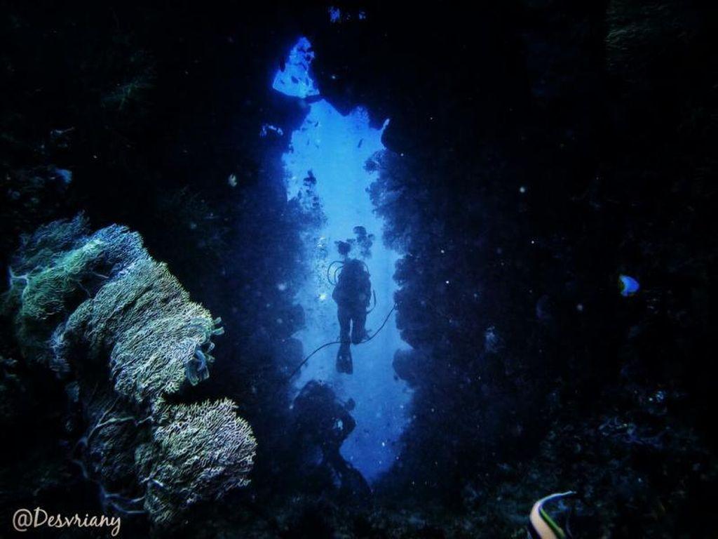 Potret Bawah Laut Banda yang Indah Nian