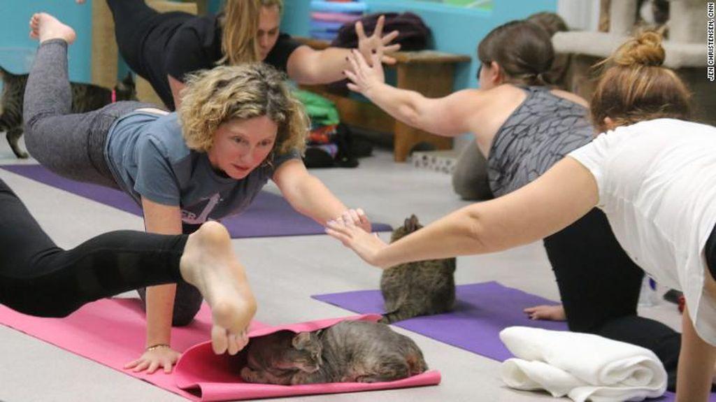 Yoga Sembari Bermain dengan Kucing-kucing Lucu, Siapa Mau Coba?