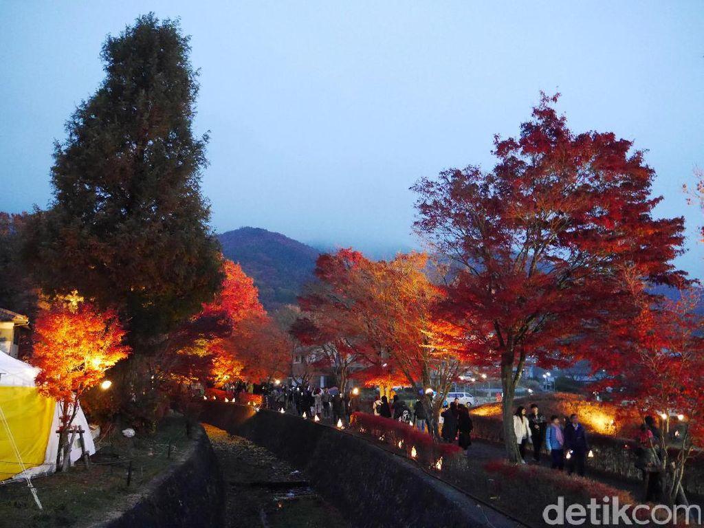 Jatuh Cinta dengan Festival Daun Musim Gugur Bercahaya di Jepang