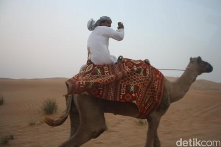 Serasa Orang Timur Tengah, Naik Unta Di Gurun Pasir