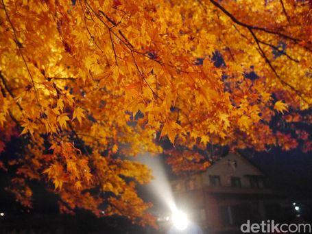 5 Tips Liburan Ke Jepang Saat Musim Gugur