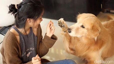 Gemas! Nongkrong Bareng Anjing Lucu Di House Of Paws Bangkok