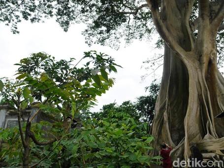 Wisata Pohon Unik Di Bali Yang Belum Banyak Orang Tahu