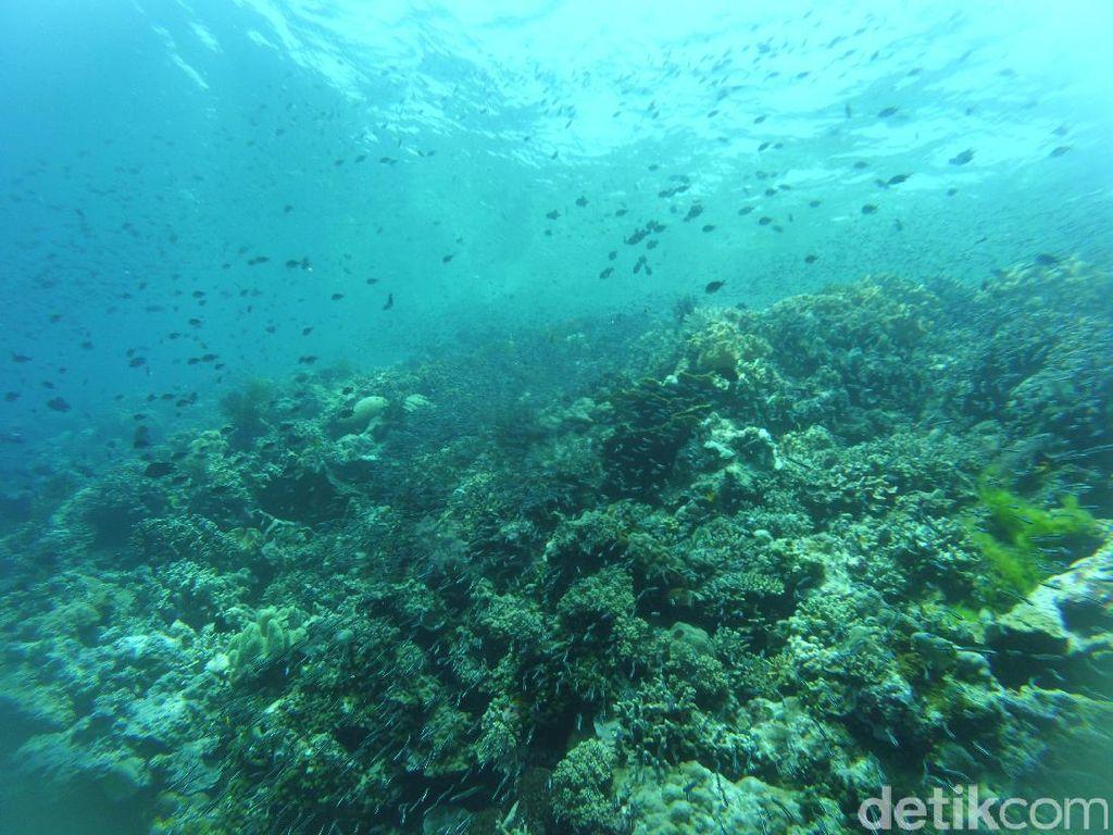 Indonesia Punya Collosseum, Tapi di Bawah Laut Wakatobi!
