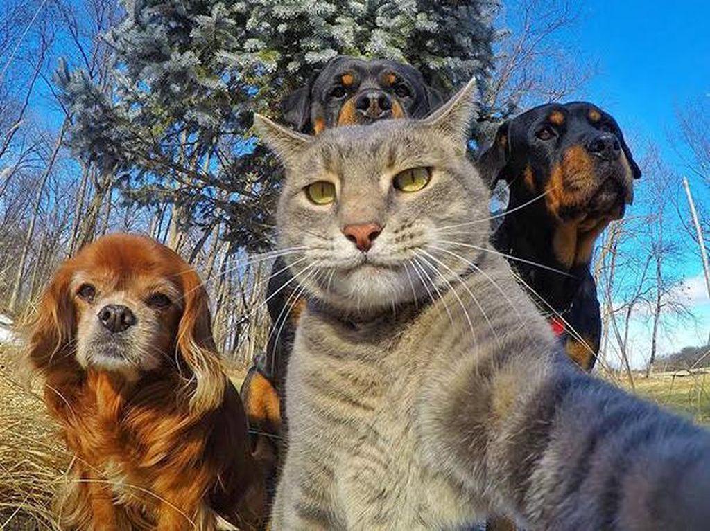 Gaya Selangit Selfie Para Hewan yang Bikin Gemas