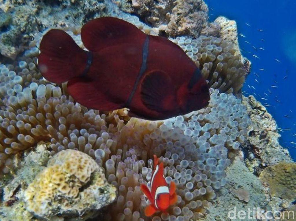 Yuk Selami Bawah Laut Bunaken