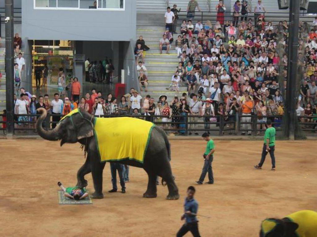 Ini Dia Pertunjukan Gajah Paling Memukau