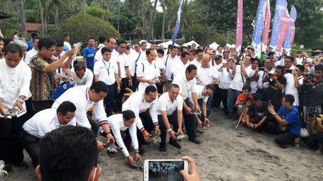 Garuda Lepaskan Tukik Penyu di Pantai Senggigi Untuk Dukung Gerakan Konservasi