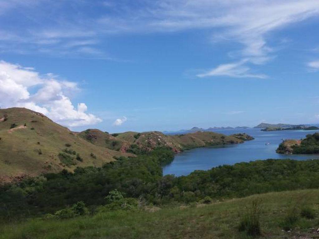 Bertamu ke Rumah Komodo di Pulau Rinca