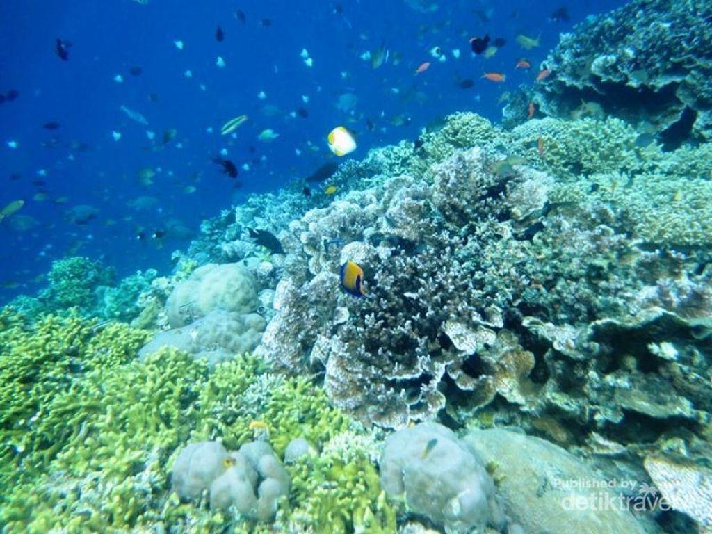 Bunaken, Keindahan Bawah Laut yang Tiada Duanya