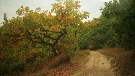 Hutan Berhantu Di Eropa Yang Konon Punya Gerbang Ke Dunia Lain