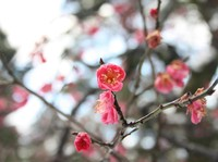 Musim Dingin, Taman Jepang ini Justru Makin Instagrammable