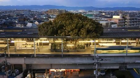 Unik! Ada Pohon 700 Tahun dalam Stasiun di Jepang