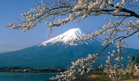 Ke Jepang di Musim Semi, Ini 7 Destinasi Terbaik untuk Melihat Sakura