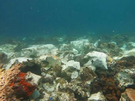 Meski Karang Rusak, Pulau Kri di Raja Ampat Tak Ditutup Untuk Turis