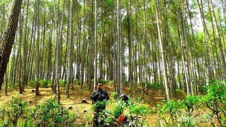 5 Hutan Pinus Keren Untuk Foto OOTD yang Kekinian