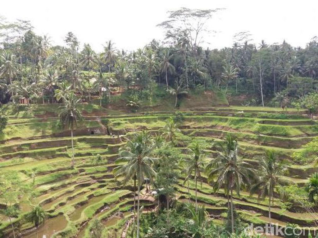 Bali Punya Sawah Seindah Ini