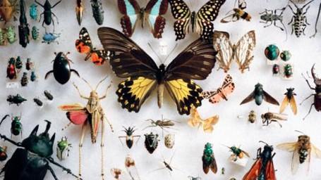 Waduh! Traveler Ceko Selundupkan Ribuan Ekor Serangga dari Australia