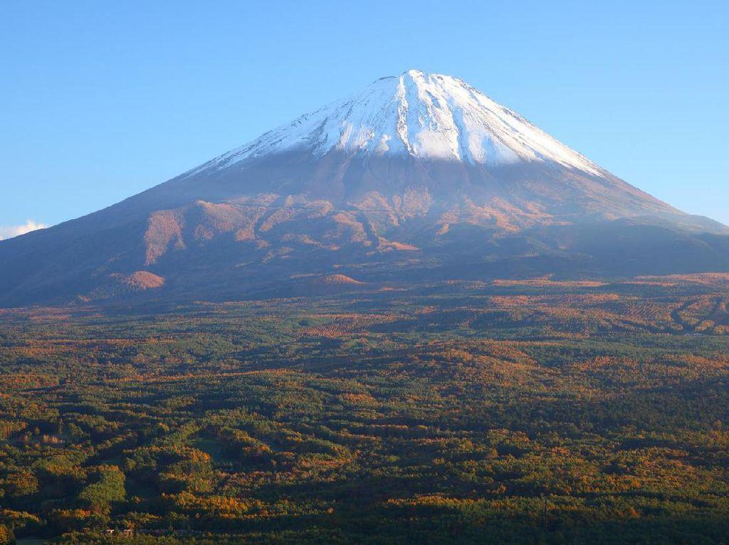 Sisi Lain Aokigahara, Hutan Bunuh Diri di Jepang