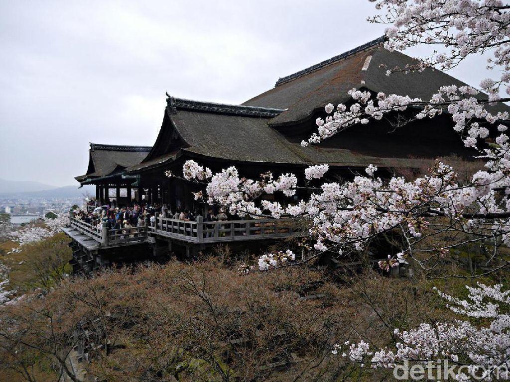 Cantiknya Sakura di Kyoto, Jadi Pengen ke Jepang!