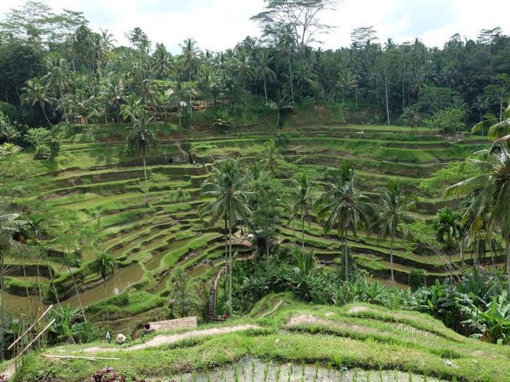 Menenangkan Pikiran di Bali, Ubud Tempatnya