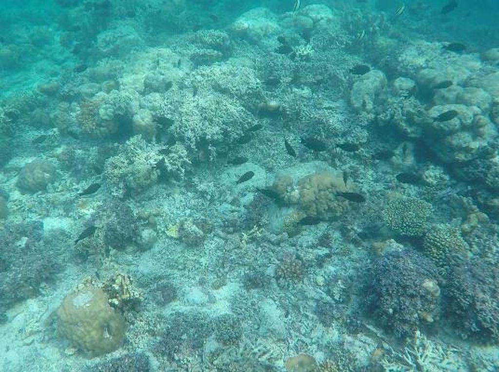Snorkeling di Maratua, Airnya Super Bening
