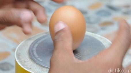 Fenomena Telur Ayam Berdiri Tegak Di Sulawesi Tengah