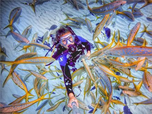 Hilangkan Depresi Lewat Menyelam dan Bersahabat dengan Hewan Laut